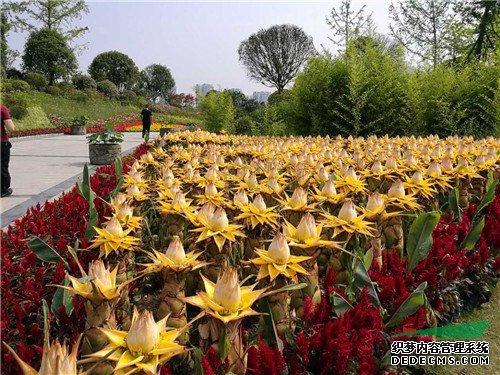 甘肃园林景观 800余种荷花亮相第31届全国荷花展遂宁展区